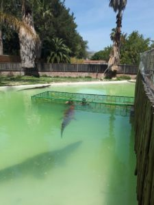 South African Crocodile Cage Diving