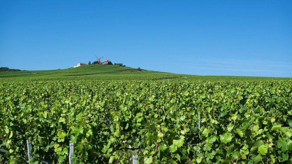 Cape Town Wine Farm Private Tour